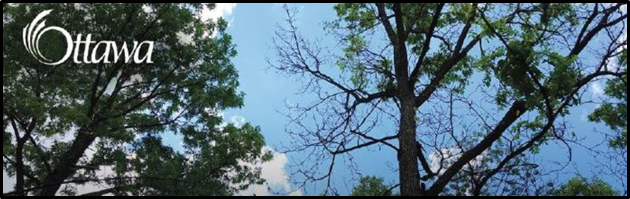 ash trees and the sky